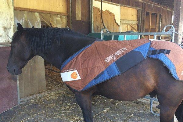 Bemer-Entspannung-Pferd